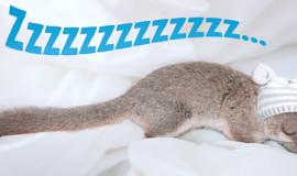 Dormir com un liró