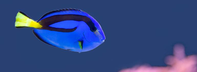 peix-refranys