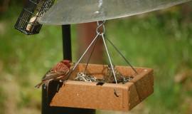 menjadora ocells