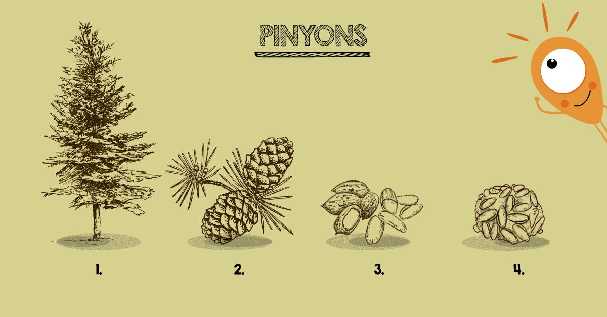 pi-pinyons
