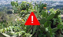 plantes invasores