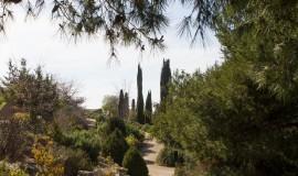 jardibotanic