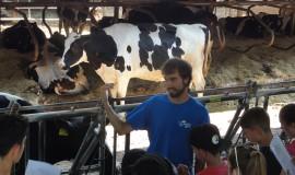 vaques fageda