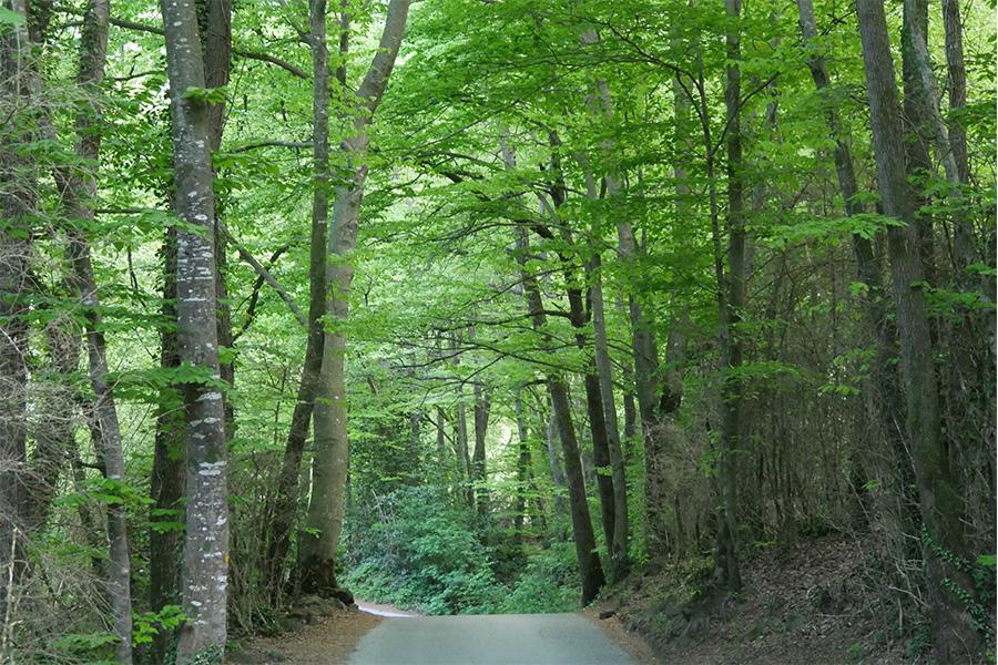 ruta-garrotxa-sostenible 4